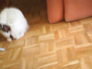 Un conejito enano - Nuestro pequeño conejo Popie lamiendo. Un gato sentado en el suelo.
