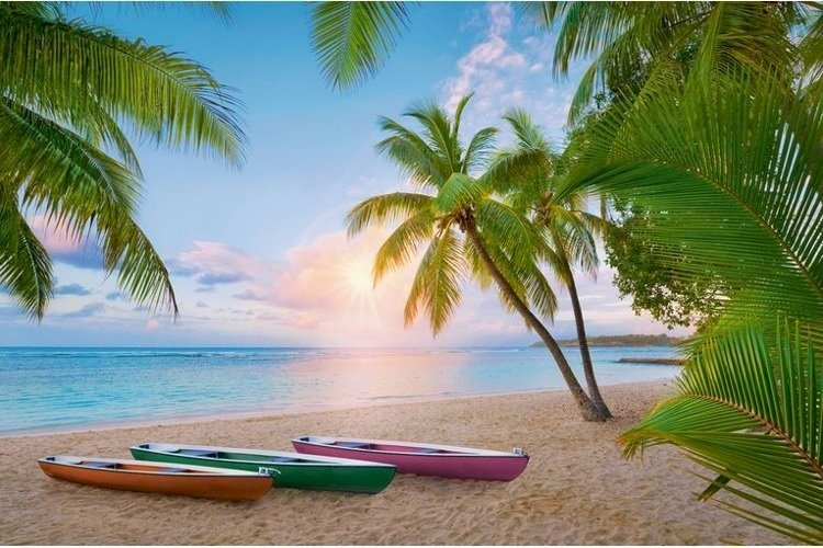 Paradise under palm trees. - Puzzle: paradise under the palm trees. A beach with a palm tree.