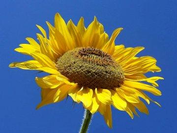 ALENATETY - QWERTYUIOASDFGHJKLZXCVBNM. Żółty kwiat