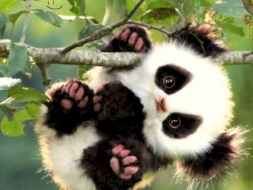 Panda Panda - Wow i don't know nothing. A monkey sitting on a white background.