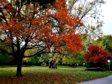 Park in the fall - colorful leaves on trees