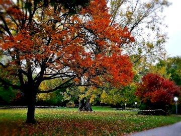Park jesienią - kolorowe liście na drzewach