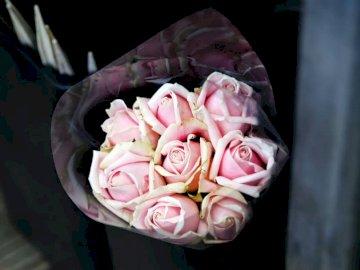 Bukiet różowej róży - Płytka fotografia różowego bukieta kwiatów. Brisbane