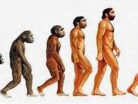 EVOLUÇÃO HUMANA - EVOLUÇÃO DOS HOMINÍDIOS.