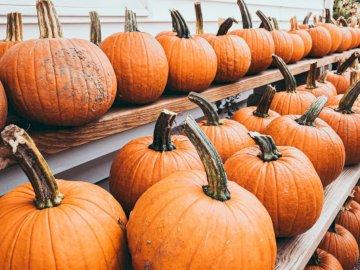 Orange pumpkins in parking lot - Shelves of orange pumpkins. Ipswich, Massachusetts. A pile of oranges sitting on top of a wooden tab