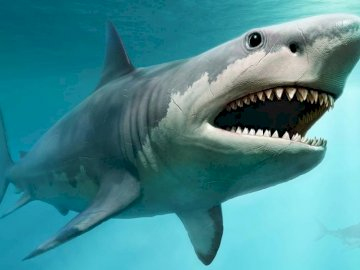 Shark puzzle - Solve the shark puzzle. A fish swimming under water.