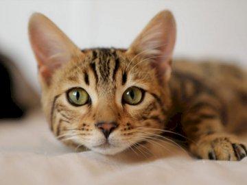 chaton gris - chaton gris moelleux. Essayons de monter pour voir ce chat