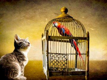 Przyjaciele - Ptaszek w klatce i jego kumpel kot