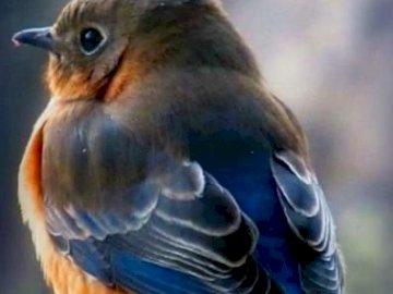 Ptak 1 - Piękny niebieski i żółty ptak 1