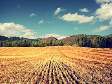 field, village - rural landscape showing a field