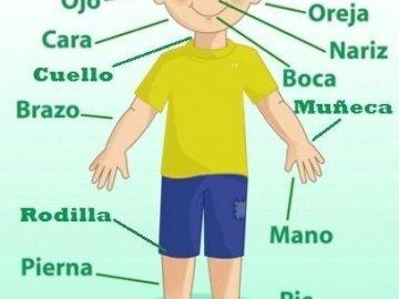 Rompecabezas Niño - Rompecabezas del cuerpo humano
