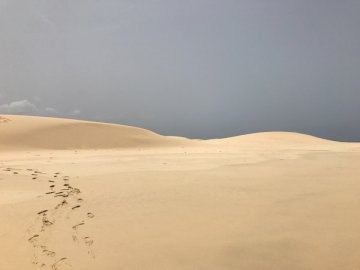 Incredible Sand Dunes of Cape - Brown sand with green plants during daytime. A sandy beach.