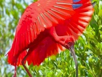 Czerwony ptak. - Układanka. Zwierzęta. czerwony ptak.