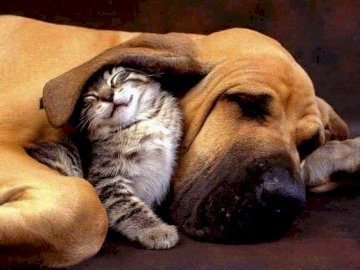 Przyjaciele - Pies i kot w przyjacielskiej komitywie