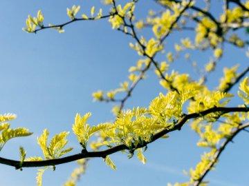 krajobraz - drzewo z kwiatami i niebo w tle