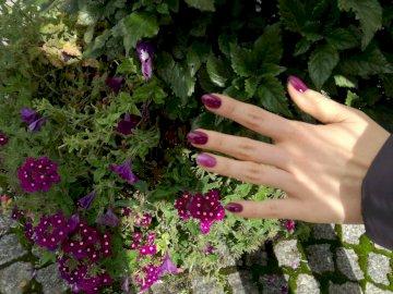gra w kolory - piękne kwiaty, piękna dłoń, piękna barwa