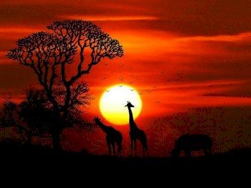 Zwierzęta z dalekich stron - Puzzle pozwolą na poznanie zwierząt afrykańskich. Będą dobrym wprowadzeniem do tematu lekcji o