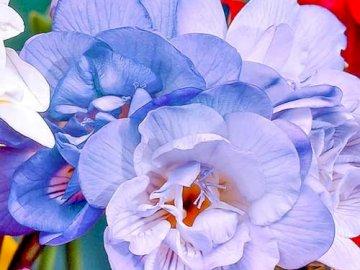 Kwiatki.... - Kwiatki.....................