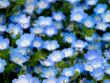Kwiatki.... - Kwiatki..................