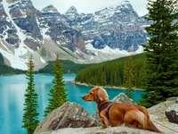 Pies W Górach Nad Jeziorem - Pies W Górach Nad Jeziorem