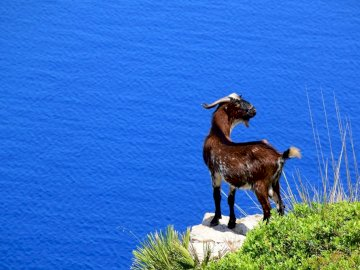 un cabron salvaje en la costa tramuntana - un cabron salvaje en la costa tramuntana