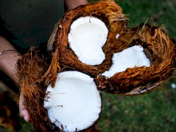 Coconut Obsession - Person holding coconut husks.