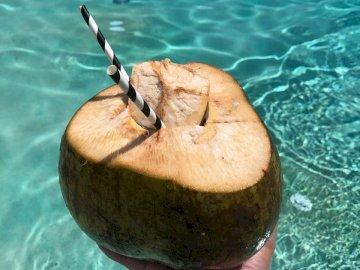 Erfrischende Kokosnuss am Pool - Person, die Kokosnussfrucht mit schwarzem Stroh hält.