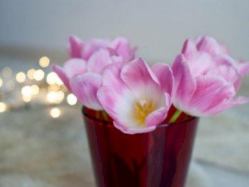 Fleurs tulipes printemps lumières - Tulipes roses dans une tasse rouge. Ukraine, Kiev