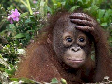 exotische apen - exotische apen