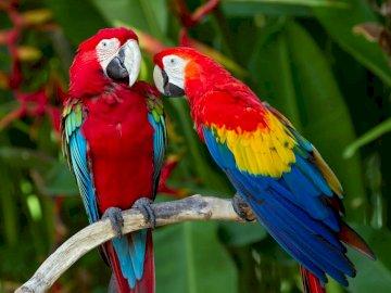 animais exóticos papagaio - animais exóticos papagaio