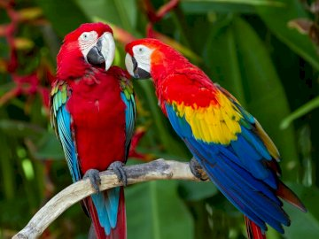 exotische papegaaidieren - exotische papegaaidieren