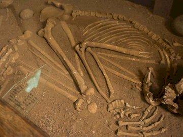 Braziliaanse archeologie - WERK ALS EEN ARCHEOLOOG MET DE GEVONDEN ONDERDELEN EN TRACES