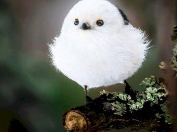 Sweet Bird e seu momento de tensão - :) :) :) :)