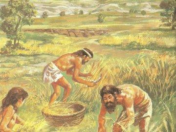 Agricultura neolitică - Dezvoltarea agriculturii și a stadiului preistoric al animalelor