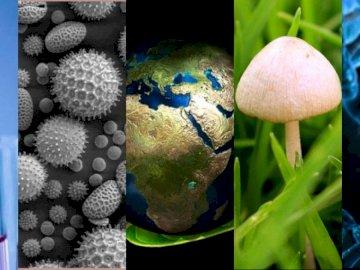 BIOLOGIA - BIOLOGIA, PUZZLES DE BIOLOGIA