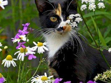 Svart kattunge - Svart kattunge bland blommor.