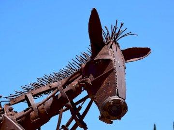 koń w Bañalbufar Mallorca - koń w Bañalbufar Mallorca