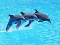 delfini - per tutti coloro che amano i delfini