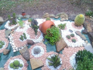 An island - Island of succulents