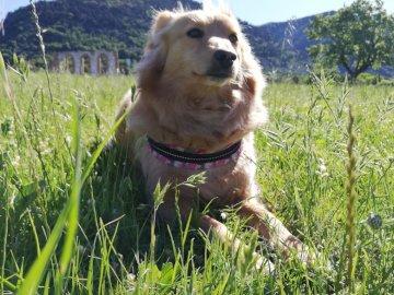 Linda Comanducci - min underbara hund Linda i parken