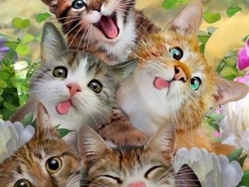 Six chats rigolos - Six chats qui font la grimace sont rigolos
