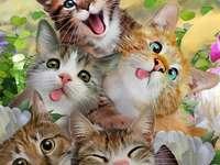 Seis gatos engraçados - Seis gatos engraçados