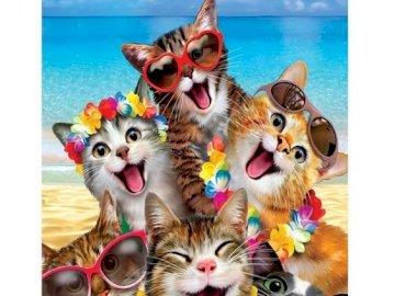 Six chats rigolos2 - Six chats rigolos à la plage