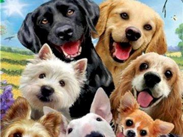 Neuf chiens rigolos - Neuf chiens grimaçants et rigolos