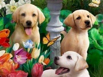 3 Beaux labradors - 3 beaux labradors dans un joli paysage