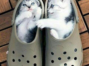 2 chatons dans des chaussures - 2 Chatons allongés dans des chaussures