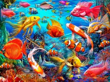 Ryby tropikalne - ryby tropikalne, ocean