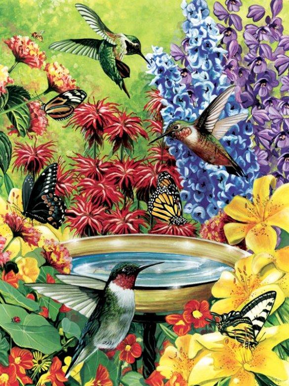 Colibris - colibris - colibris, oiseaux, colibris (10×10)