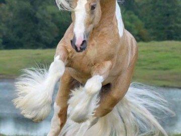 grivest con - άλογο τρεξίματος