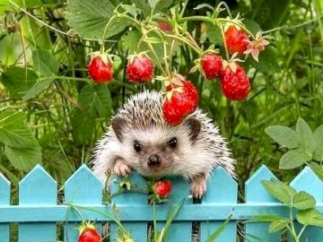 hedgehog on the fence - hedgehog on the fence